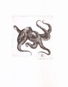Pointe sèche - le poulpe se dit pouffre à Sète